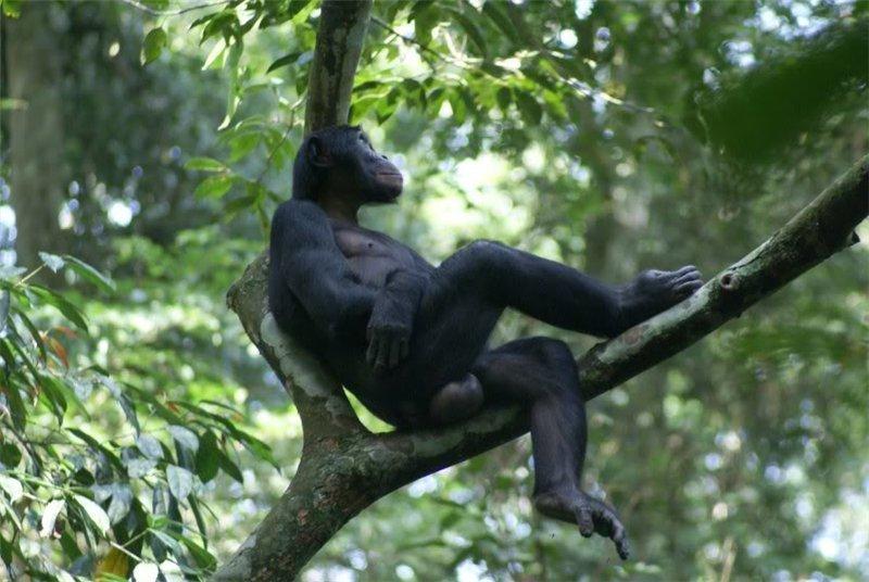 Секс с приматам