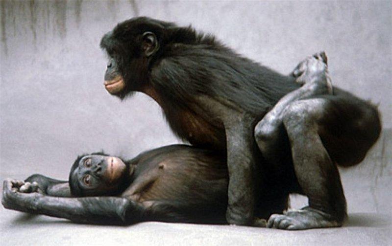 Секс женщин с шимпанзе
