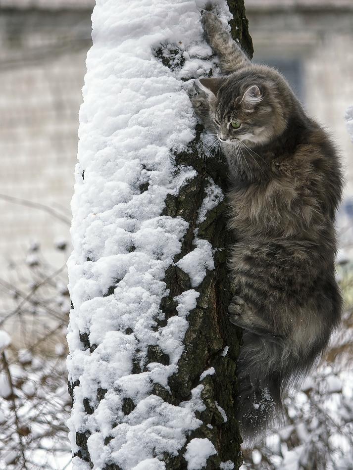 Зима 2 кота