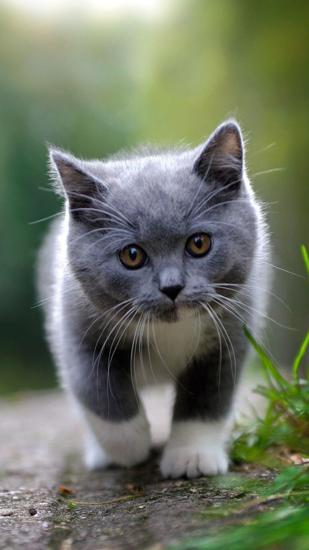 Коты на телефон картинки