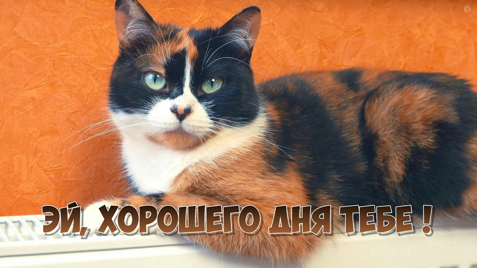 картинки куки кот