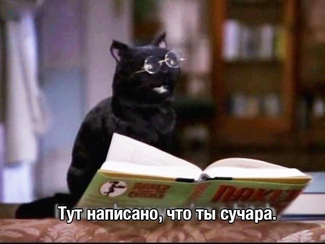 Сабрина маленькая ведьма сейлем кот