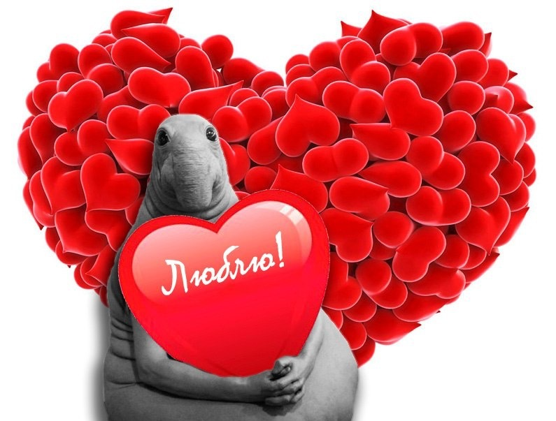 Анкета о знакомстве и любви программа знакомств в интернете