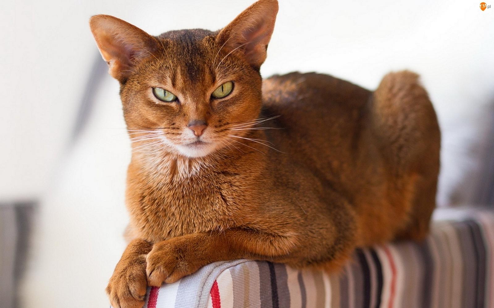 Самая красивая картинка кота