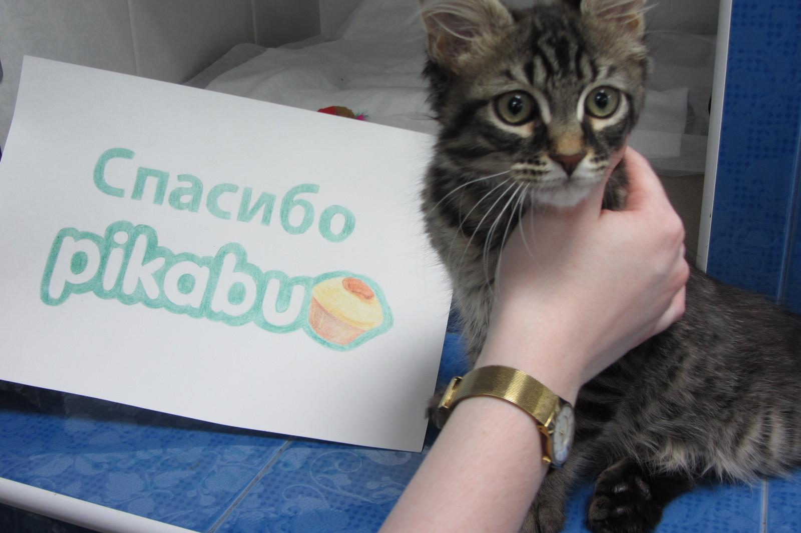 Благодарность кот