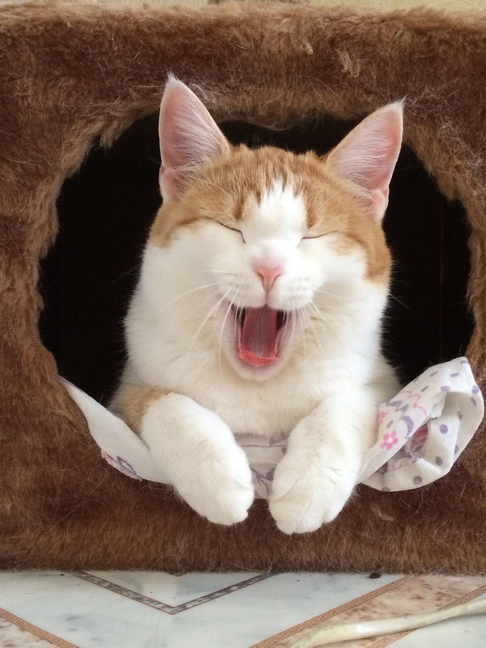 Кот ссыт на ковер