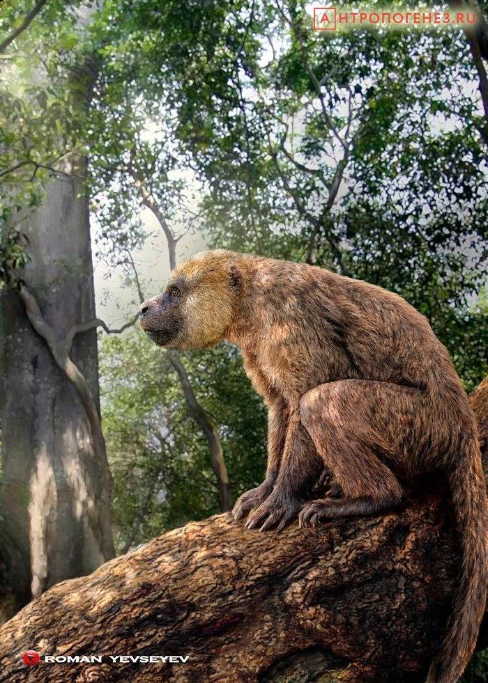Resultado de imagem para aegyptopithecus