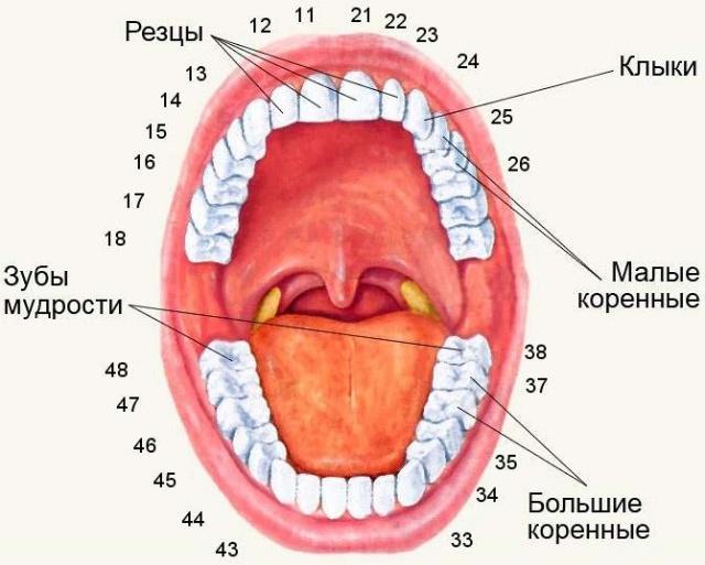 Cenovnik stomatoloskih usluga nis