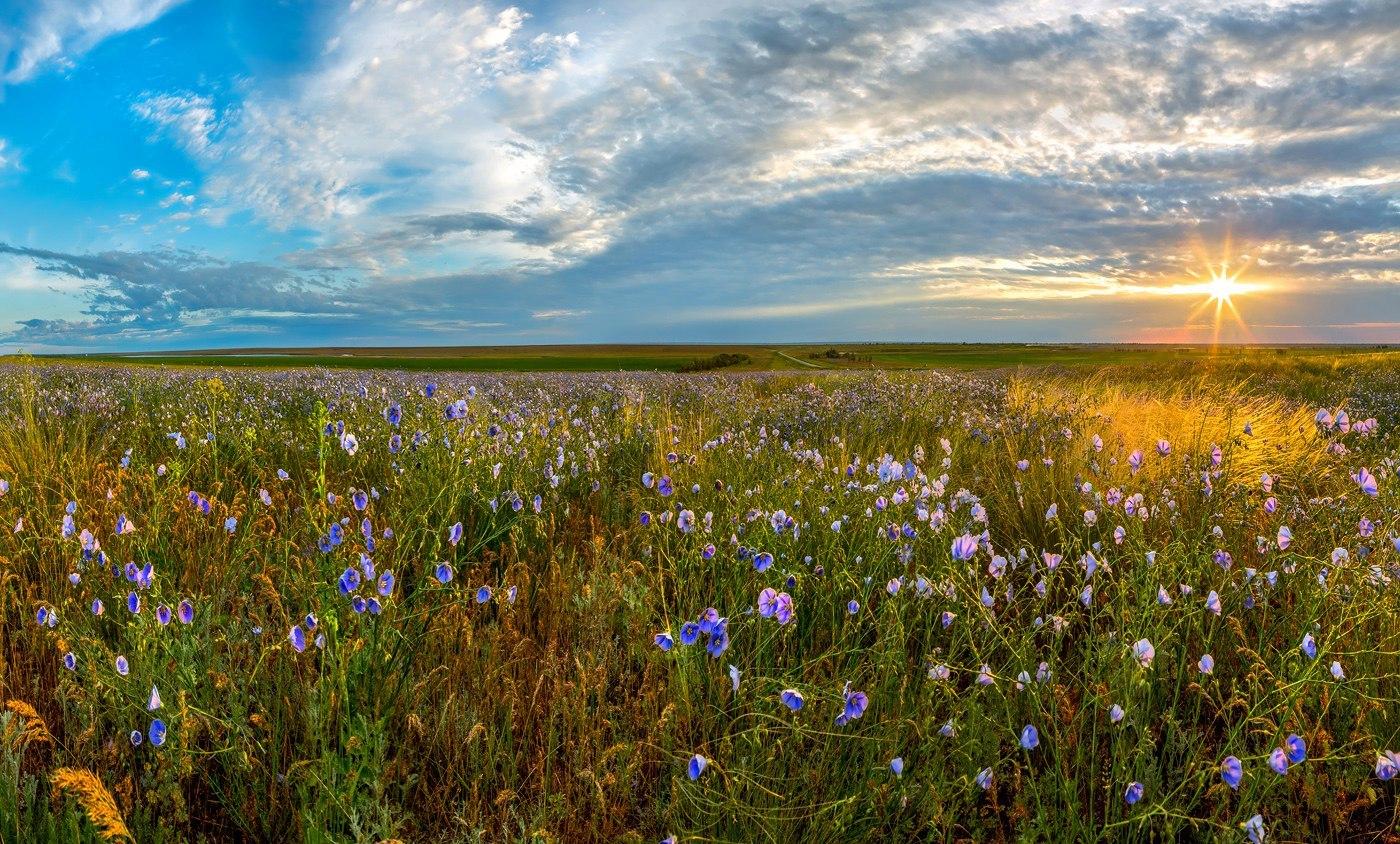 фото весной степь