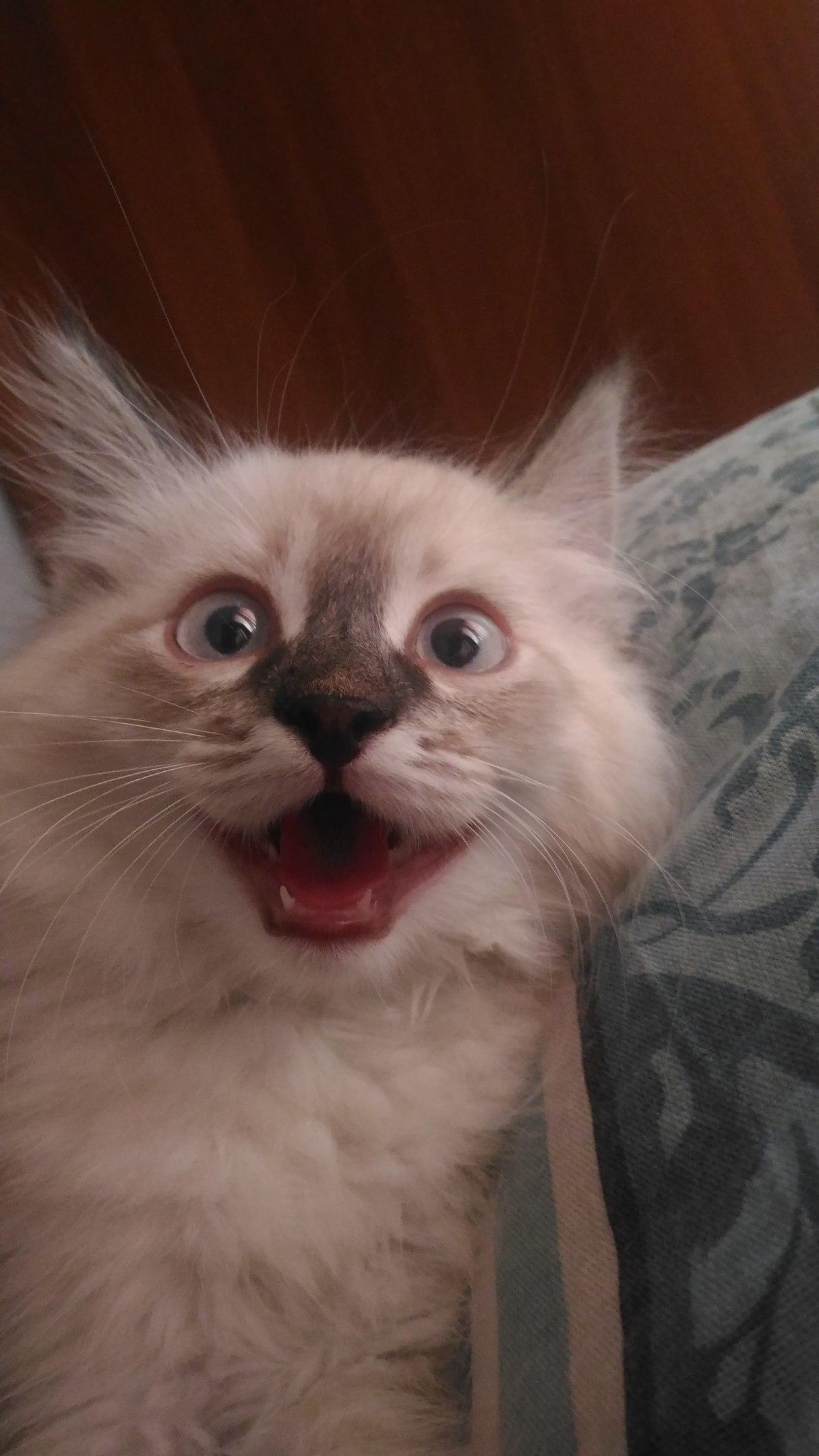 Привет картинка кот