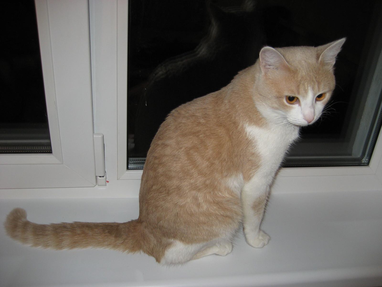 Кот убежал в окно