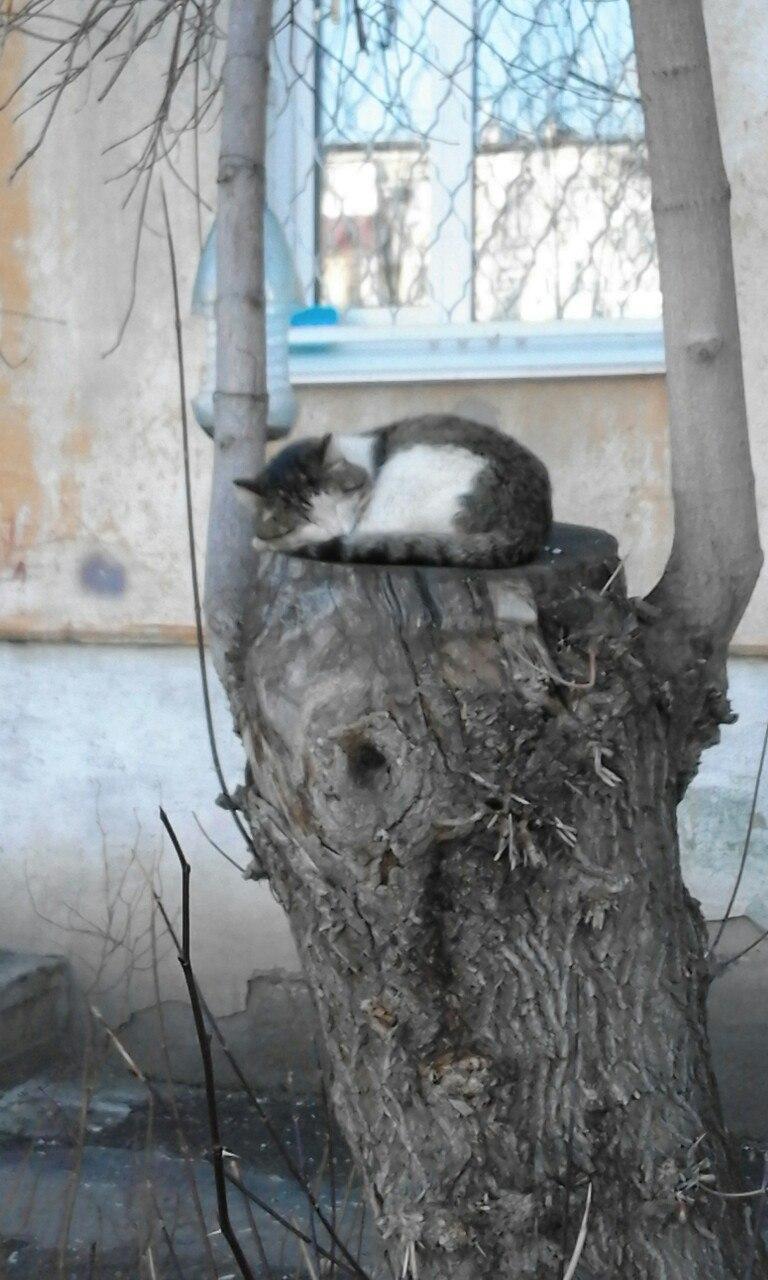 Как убрать котов в дворе