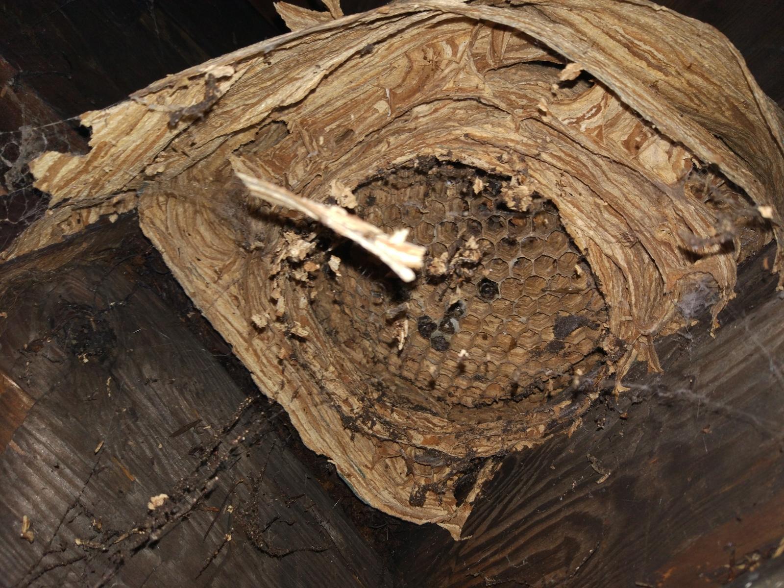 Огромный улей шершней в заброшенном здании шок!!!! - YouTube | 1200x1600
