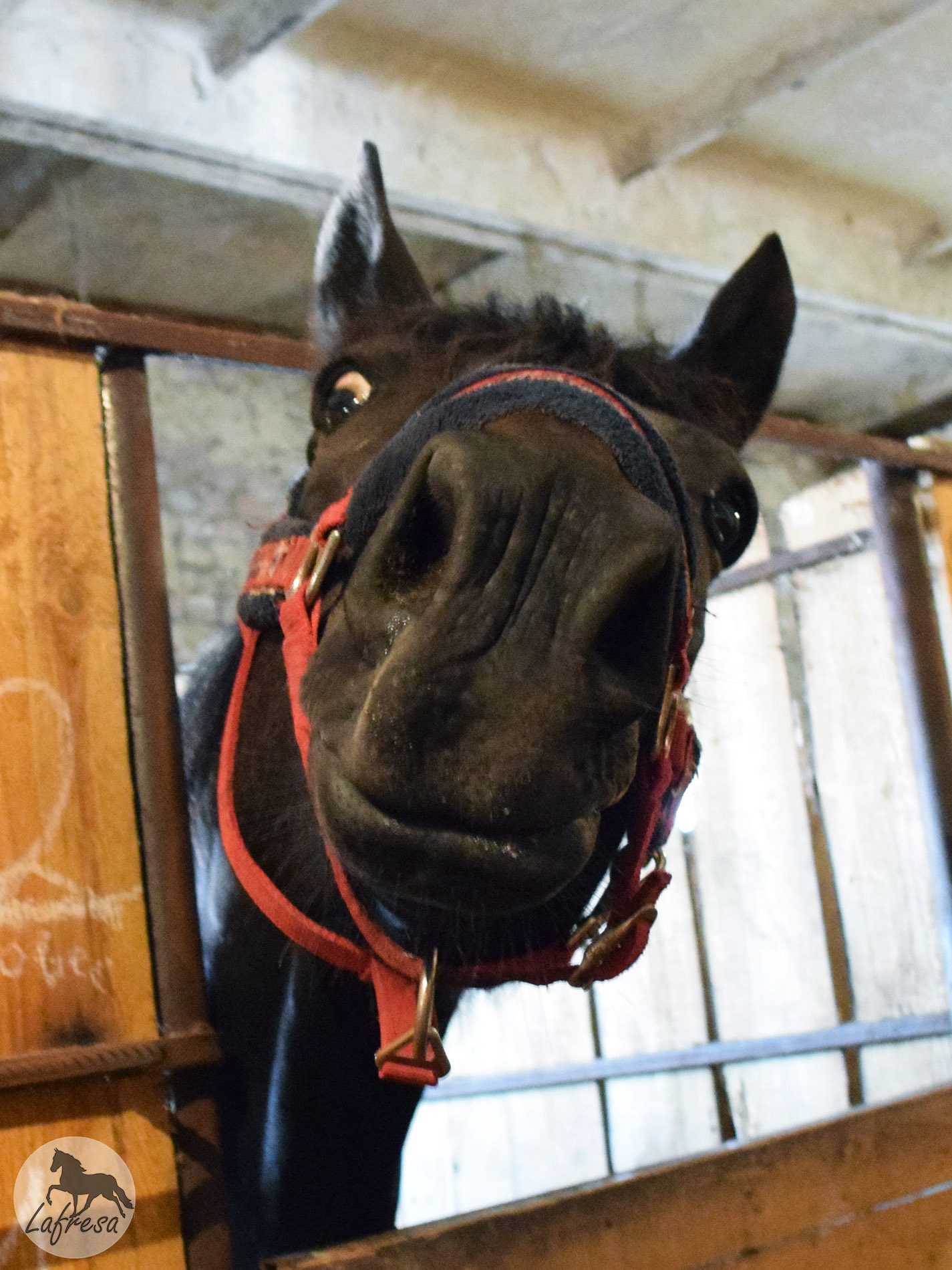 Нас называют конями нахуй