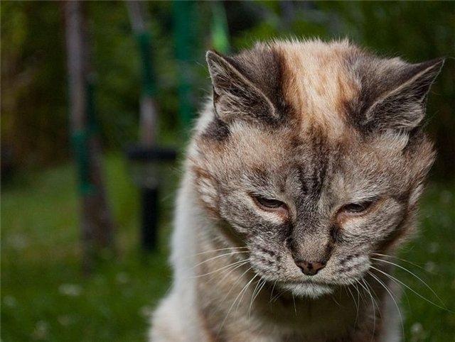 Проблемы с суставами у старых кошек боли в суставах осенью