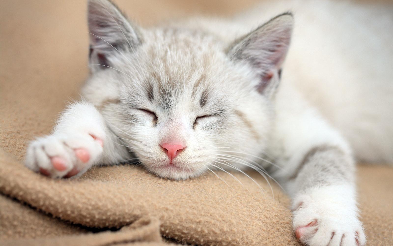 милых котиков фото