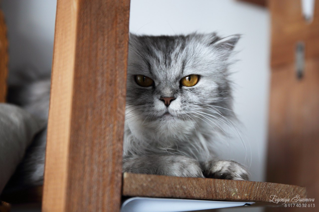 Чтобы кот не приставал к кошке