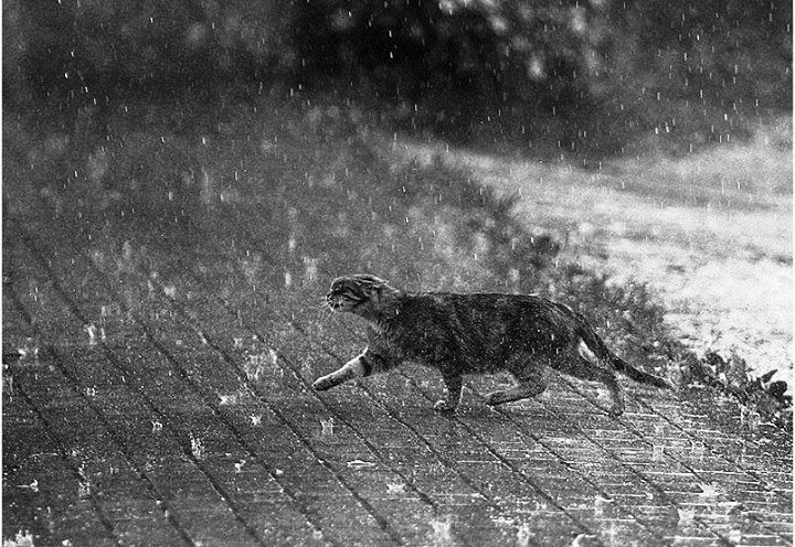Кошачье, полуночное | Пикабу