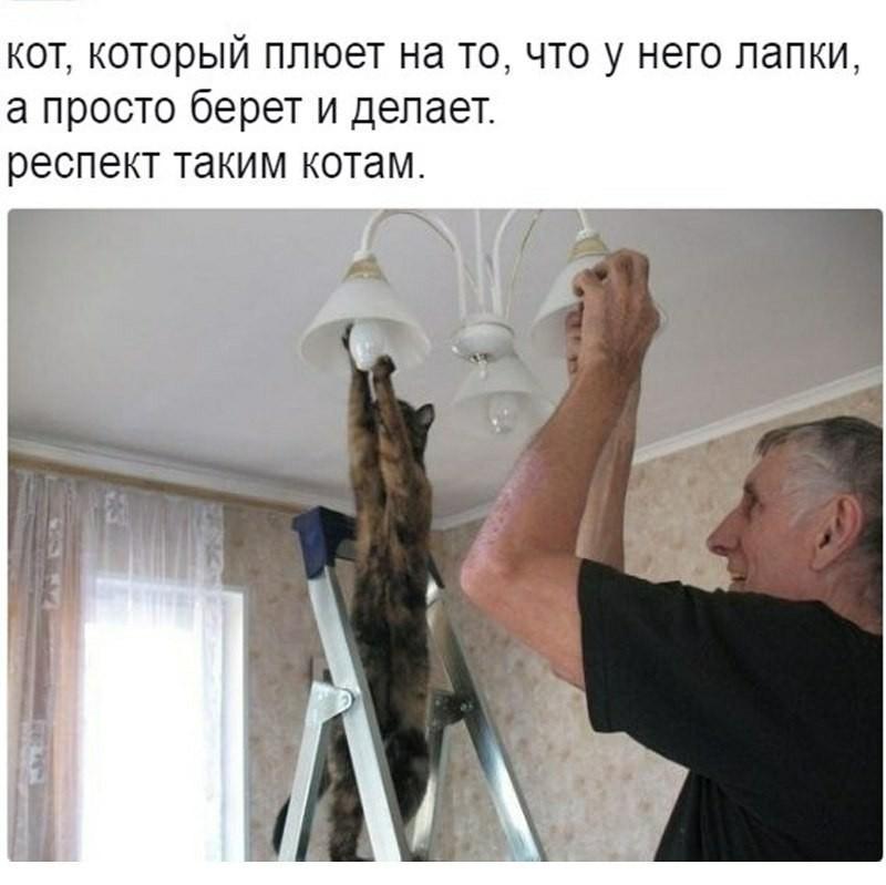 1502015624144023494.jpg