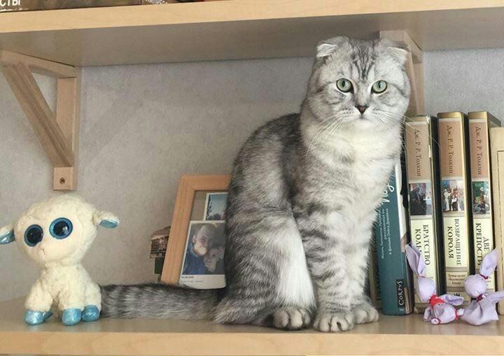 Как найти кота дома если он потерялся