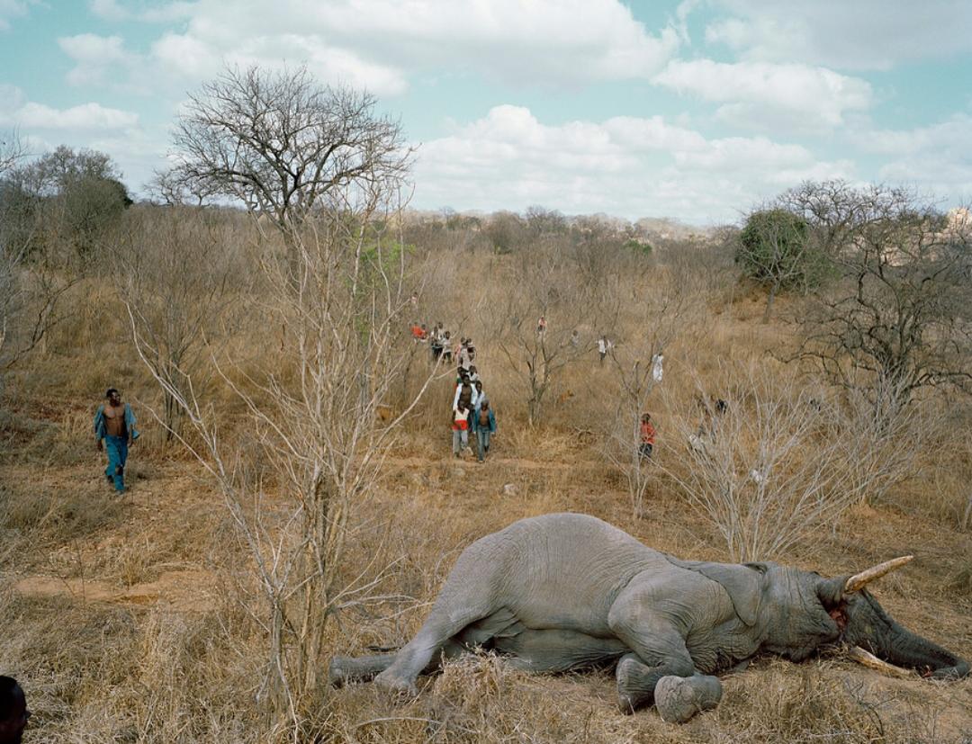 Тебя сьесть слон и по хуй что он травоядное