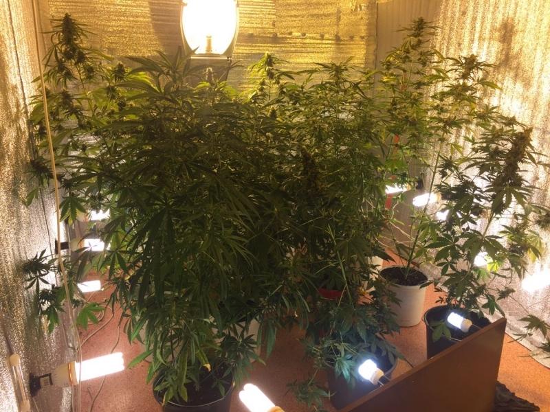 Выращивание конопли дома форум собаки чувствуют марихуану