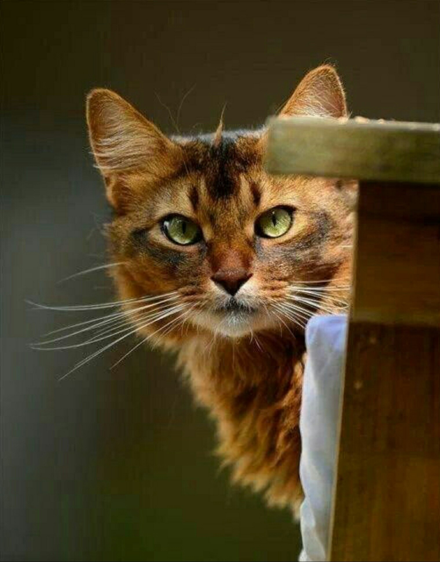 Картинки волшебный кот