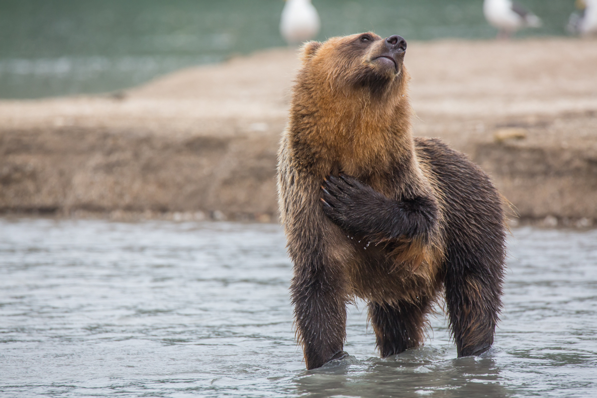 Фото медведи пизда