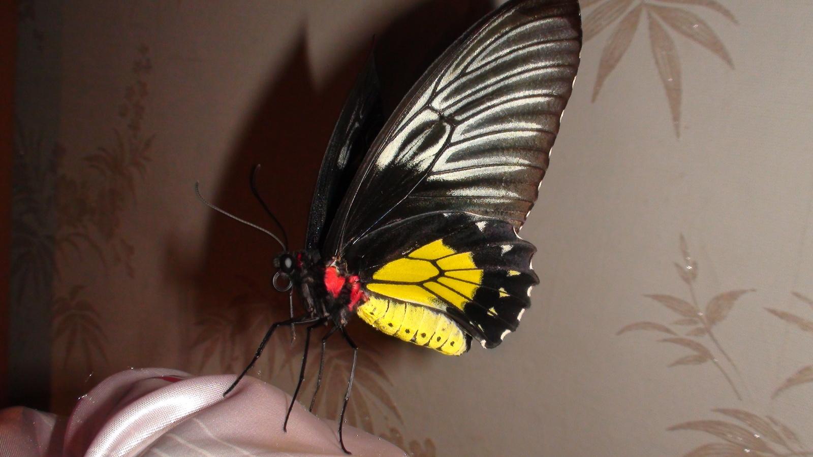 Бизнес идея разведение бабочек открытие фирмы в риге