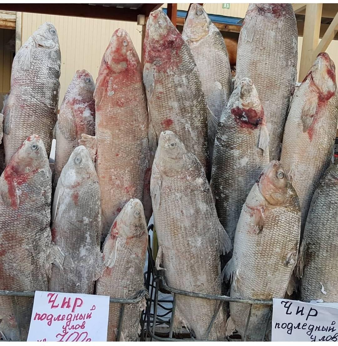 рыба в якутии