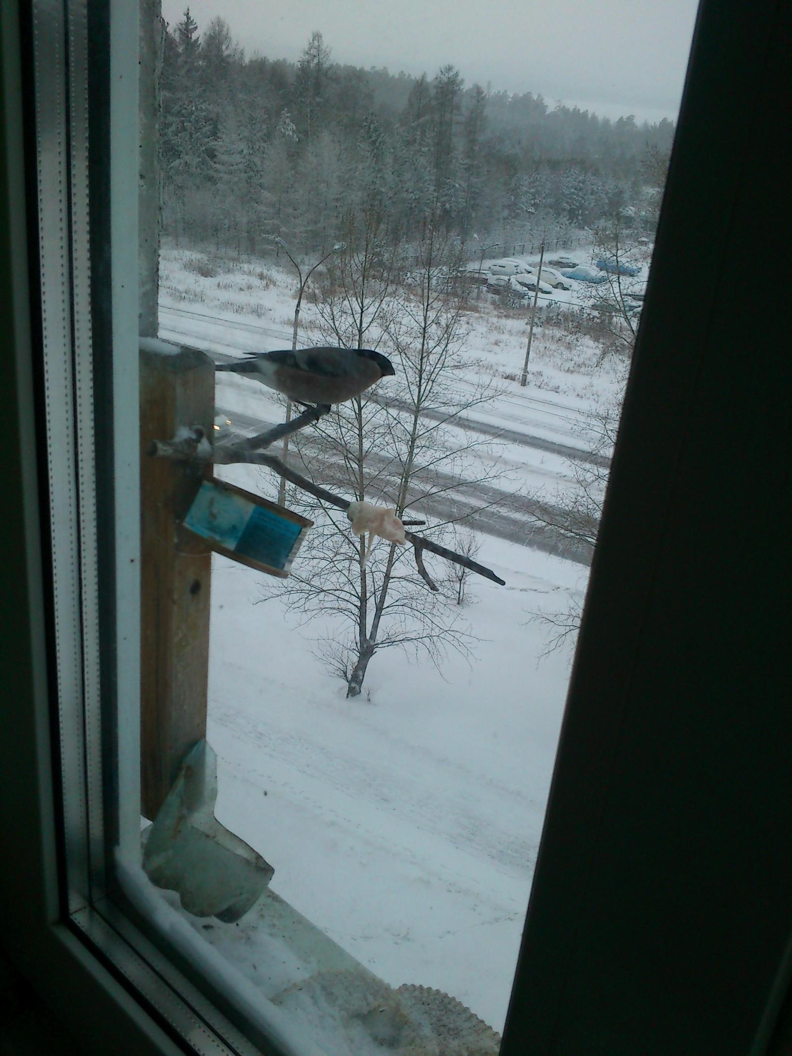 Кормушка птиц за окно своими руками фото 411