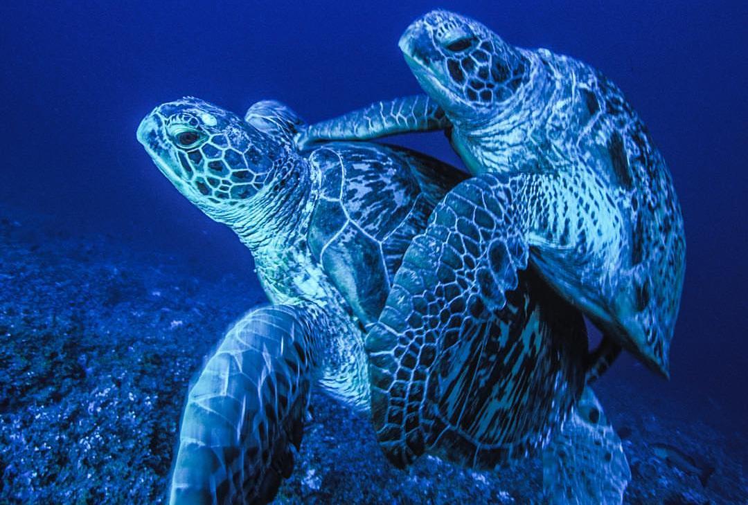 Океан секс размножения млекопитающих