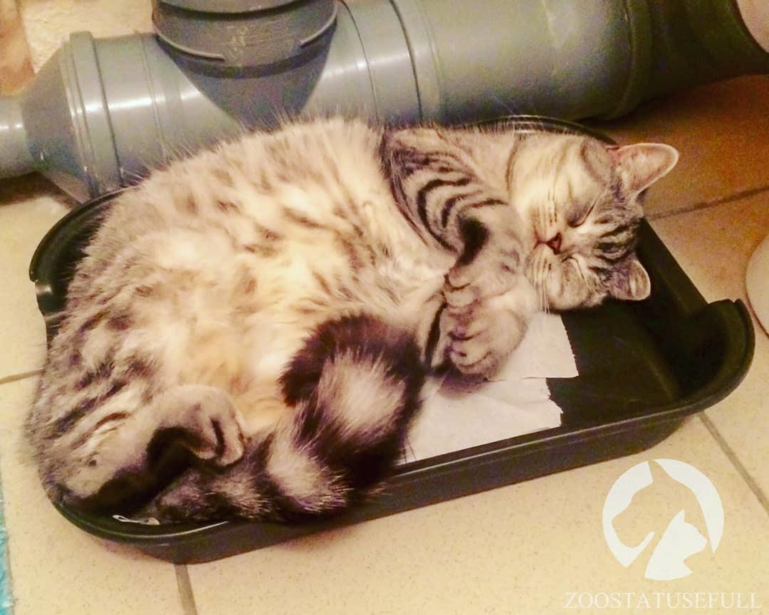 Кот нок много ссыт