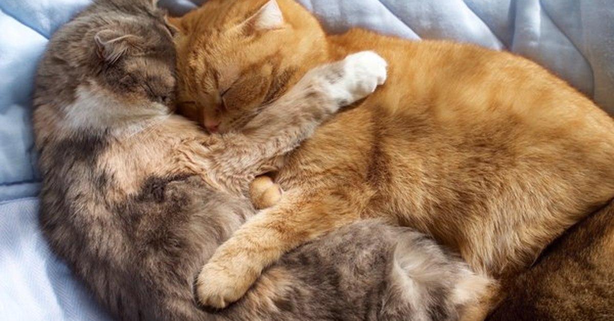 котята спят в обнимку фото его жизнью управляют
