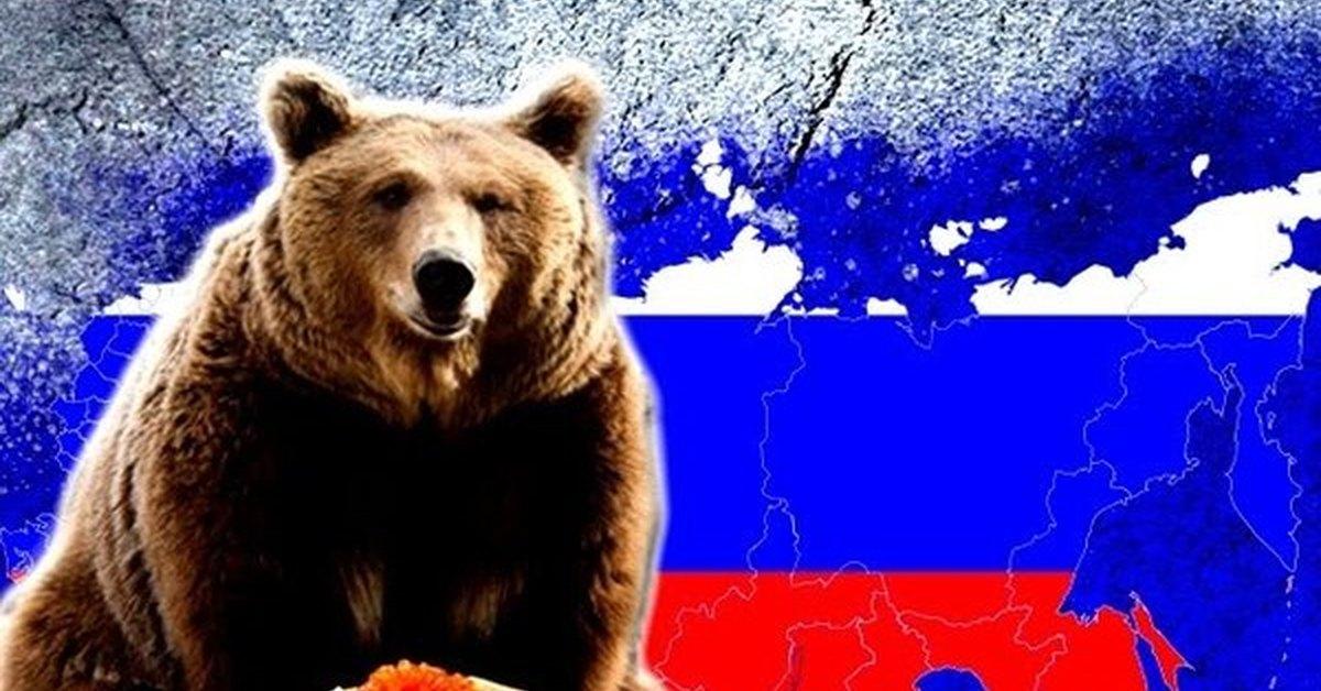 Медведь россии картинки