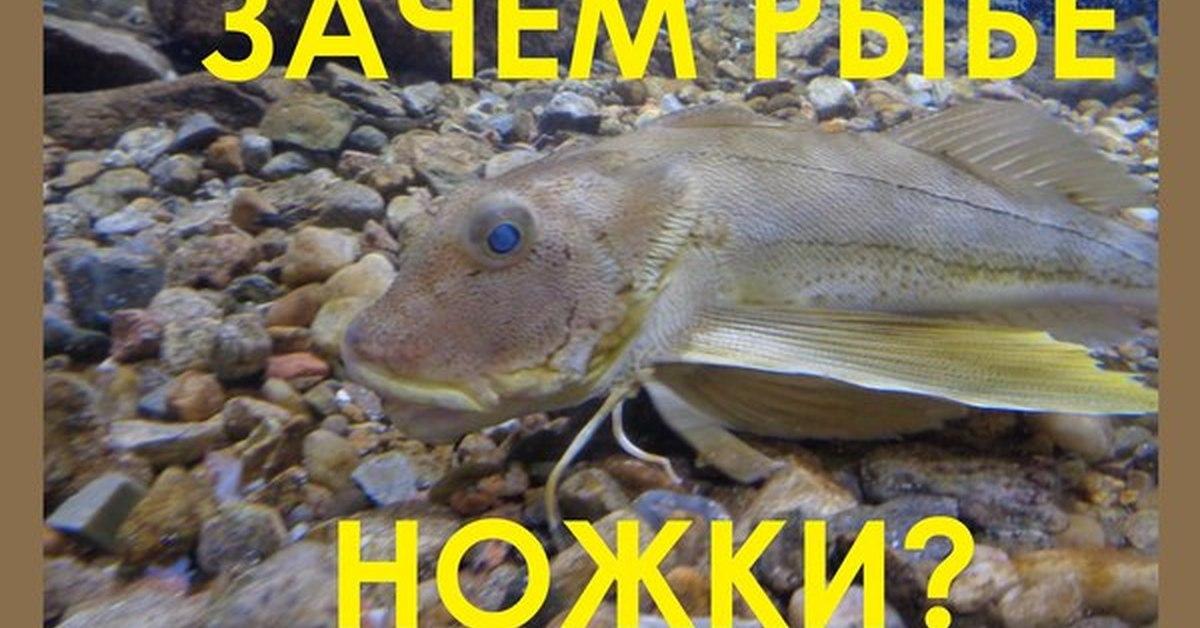 video-gospozha-i-ribi-video-dlya