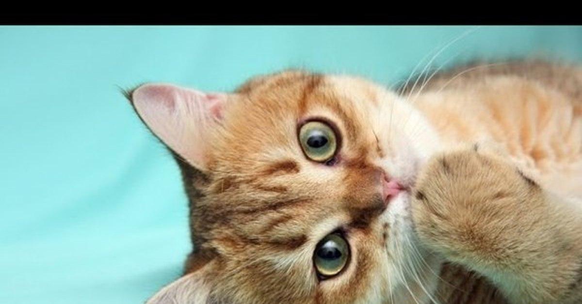 free desktop wallpaper desktop wallpaper-band of cats - HD1920×1200