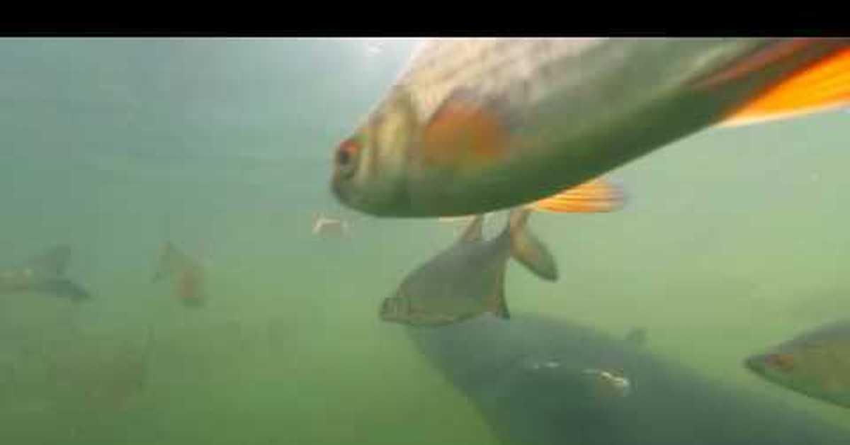 Рыбалка в чернобыле на ютубе