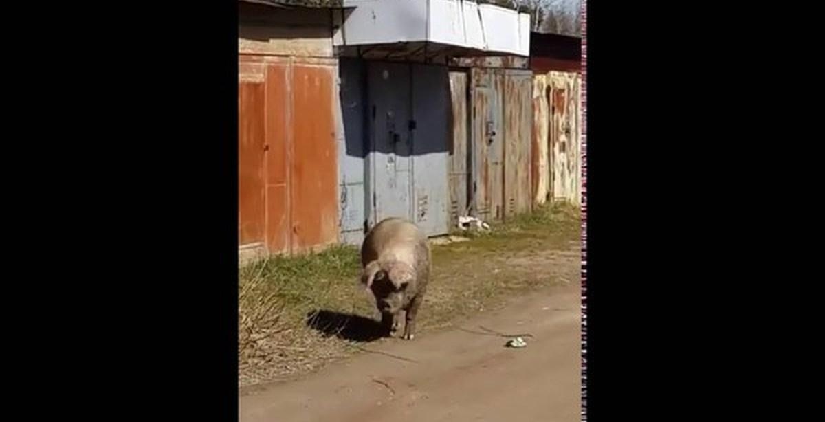 prishla-v-garazh-za-seks-seks-s-tadzhichkoy-v-palatke-video